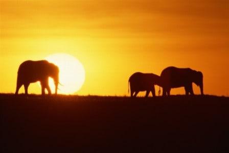 elephantsinsunws