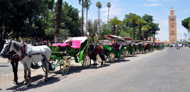 Caleches lined up in Jemaa el Fna
