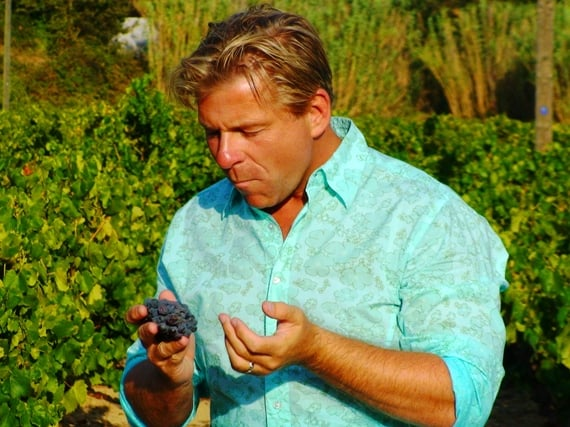 Tasting the first grapes of harvest